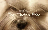 The Tibetan Pride (FCI)